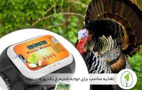 دستگاه جوجه کشی بوقلمون و ترفند جوجه آوری از این پرنده