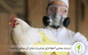 درباره بیماری آنفولانزای مرغی و درمان آن بیشتر بدانید!