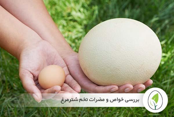 بررسی خواص و مضرات تخم شترمرغ