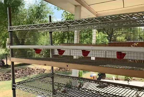 نصب آبخوری نیپل پرورش بلدرچین