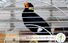 علت سکوت و حرف نزدن مرغ مینا