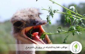 بیماری های تغذیه ای در شترمرغ