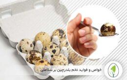 خواص و فواید تخم بلدرچین بر سلامتی