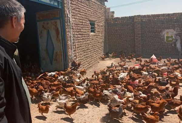 ساخت لانه مرغ با استفاده آجر
