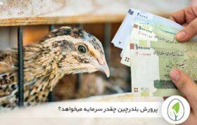 هزینه پرورش بلدرچین تخمگذار و گوشتی