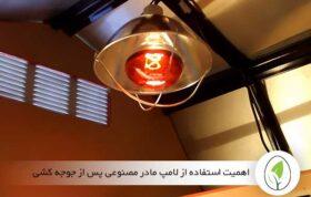 اهمیت استفاده از لامپ مادر مصنوعی پس از جوجه کشی - چیکن هچ