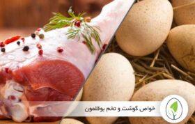 خواص گوشت و تخم بوقلمون - چیکن هچ