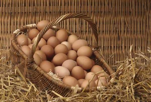 ویژگی محیط نگهداری تخم نطفه دار - اندیشه سبز