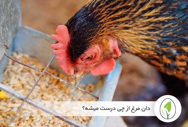 دان مرغ از چی درست میشه؟ - چیکن هچ
