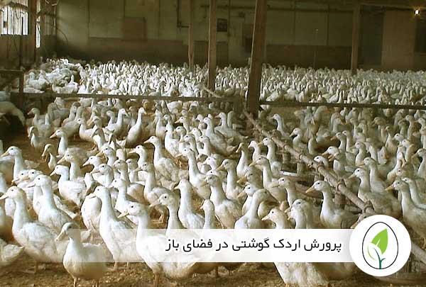 پرورش اردک گوشتی در فضای باز - چیکن هج