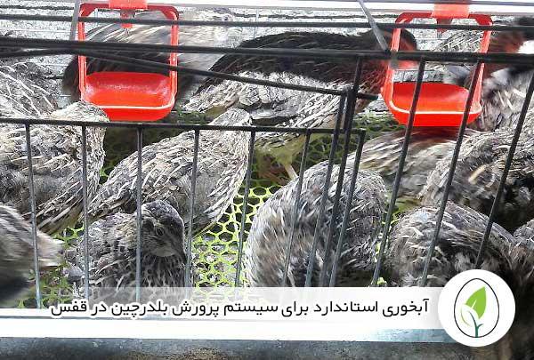 آبخوری استاندارد برای سیستم پرورش بلدرچین در قفس - چیکن هچ