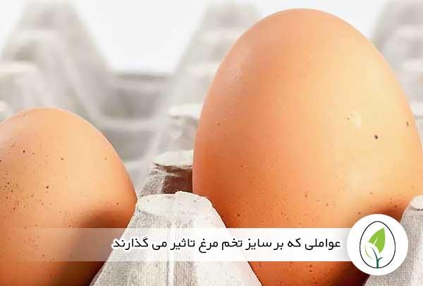 عواملی که بر سایز تخم مرغ تاثیر می گذارند - چیکن هچ