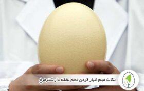 نکات مهم انبار کردن تخم نطفه دار شترمرغ - چیکن هچ