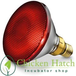 لامپ مادر مصنوعی - لامپ مادون قرمز - چیکن هچ