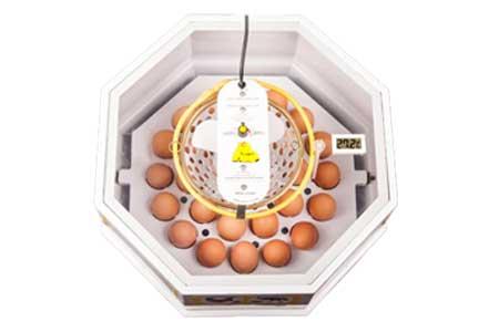 خرید دستگاه جوجه کشی مام کاکس - chicken hatch